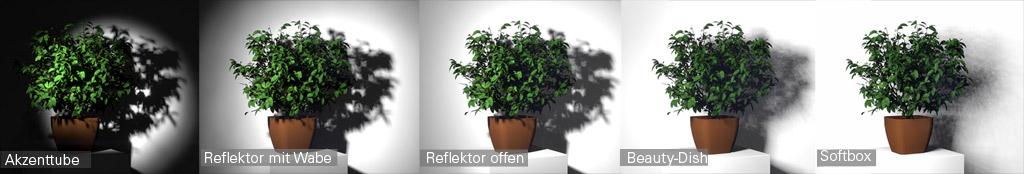 Lichtformer-Vergleich-Pflanze / Akzenttube, Reflektor, Reflektor mit Wabe, Beauty-Dish, Softbox